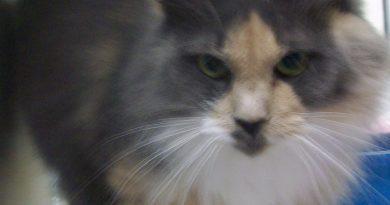 Pet Of The Week: Chloe