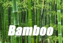 LINN: Bamboo For West Virginia