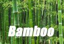 LINN: Bamboo For West Virginia